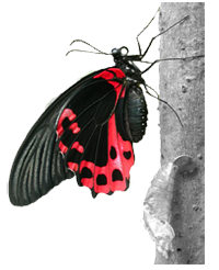 Butterflies are seen as the departed souls of our ancestors