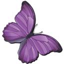 Donna Zander & Associates butterfly logo